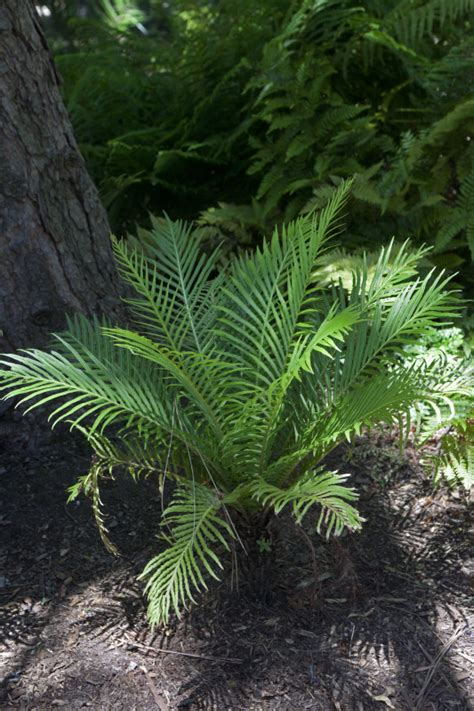small fern plant growing near trunk of a tree clippix