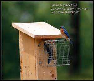 build bluebird house plans predator guard diy pdf wooden