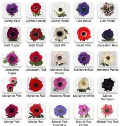 flower color meanings chart flower chart flower color charts s florist