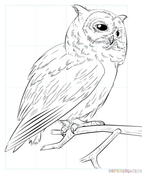 realistic owl coloring page realistic owl on a branch drawing