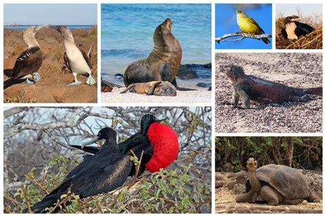 imagenes animales galapagos collage de la fauna de las islas gal 225 pagos imagen de