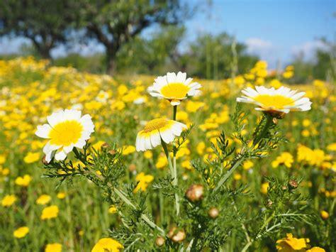 fotos gratis blanco campo cesped prado pradera