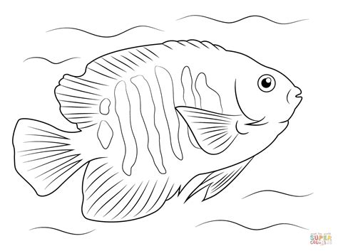 flame angelfish coloring page free printable coloring pages