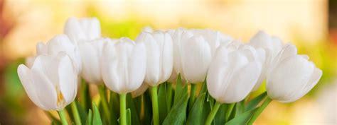 Vase For Plants Flower Delivery Toronto Order Online Amp In Store King