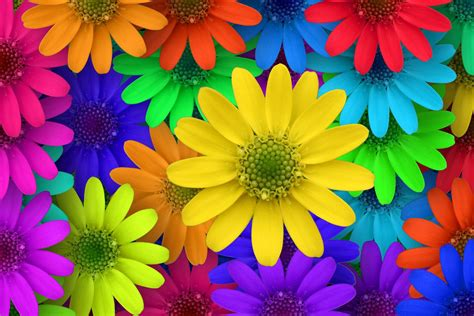 fiori bellissimi sfondi sfondo quot fiori colorati bellissimi quot 1920 x 1280 foto