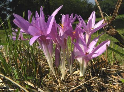 fiori da giardino perenni foto piante perenni da fiore autunnali speciali piante