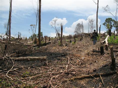 yang dilarang di indonesia beberapa permasalahan lingkungan hidup di indonesia
