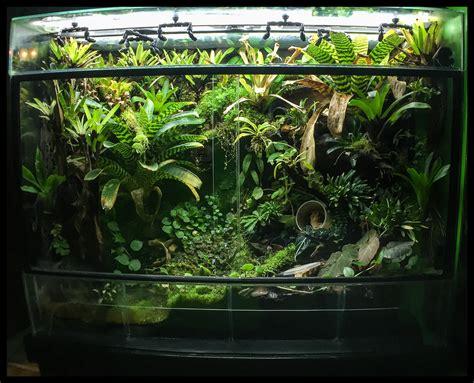 Small Living Room Ideas Pictures 180 gallon vivarium update youtube