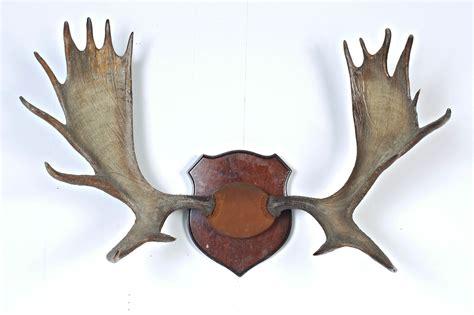 Moose Rack by Tx025 Moose Antlers Acme Studio