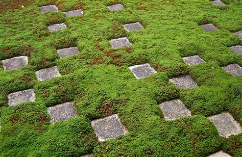 moss backyard japanese zen gardens