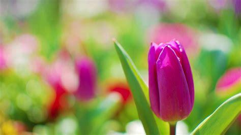 Blume Mit Rosa Blüten by Die 70 Besten Sch 246 Ne Bunte Hintergrundbilder