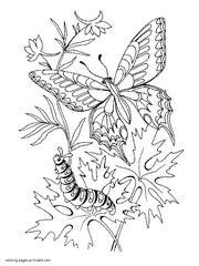 caterpillar and butterfly 2 coloring page supercoloring com printable butterfly coloring pages