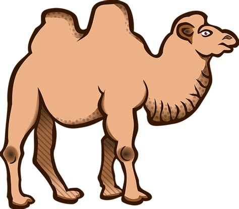 camel clip animal animals bactrian camel 183 free vector graphic on pixabay