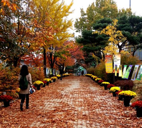 Seoul National Mba by International Programs Mccombs School Of Business