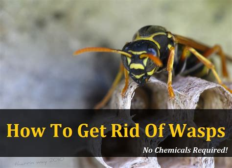 how to get rid of wasps in house siding how to get rid of wasps in house siding 28 images how to get rid of wasps using a