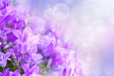purple spring flowers custom wallpaper mural print  jw