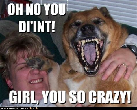 Dog Laughing Meme - 35 mot funniest laugh meme pictures you have ever seen