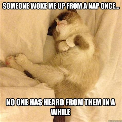 Nap Meme - 2 grumpy cat taking a nap funny pictures dump a day