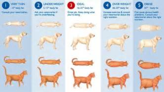 how do i help my pet maintain a healthy weight