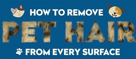 how to get rid of dog hair on couch 1000 ideas about remove pet hair on pinterest urine