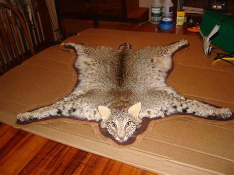 Bobcat Rug bobcat rug roselawnlutheran