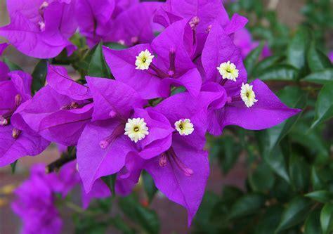 percantik halaman rumahmu  warna warni bunga