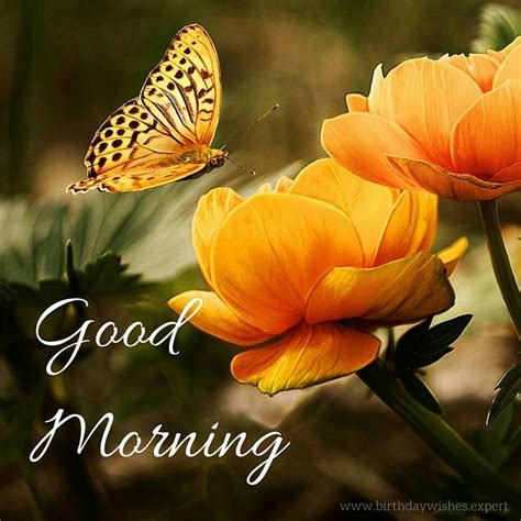 Good Morning Quote With Flowers And Butterflies Pictures, Photos, and Images for Facebook