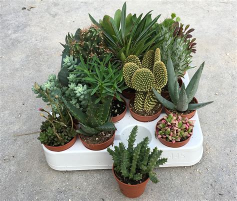 tipi di piante da appartamento piante grasse da appartamento assortite