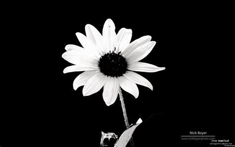 desktop wallpaper black and white flowers black and white flowers wallpaper 1440x900 51486
