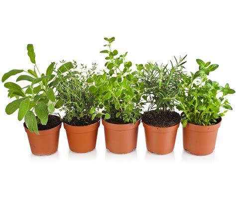 semina giardino piantare e seminare kb giardino