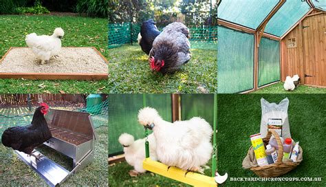 backyard chicken processing 6 essential accessories for your backyard chicken coop