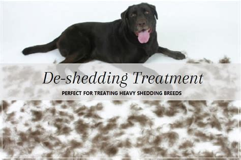 Shedding Treatment by De Shedding Treatment Groomers Nutritionist Pooch