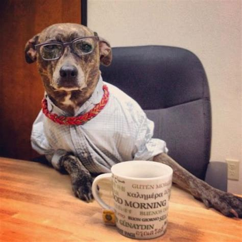 dogs and coffee is 60 20 photos noweevil