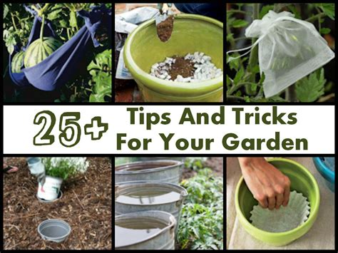 garden tips gardening tips and tricks crafts