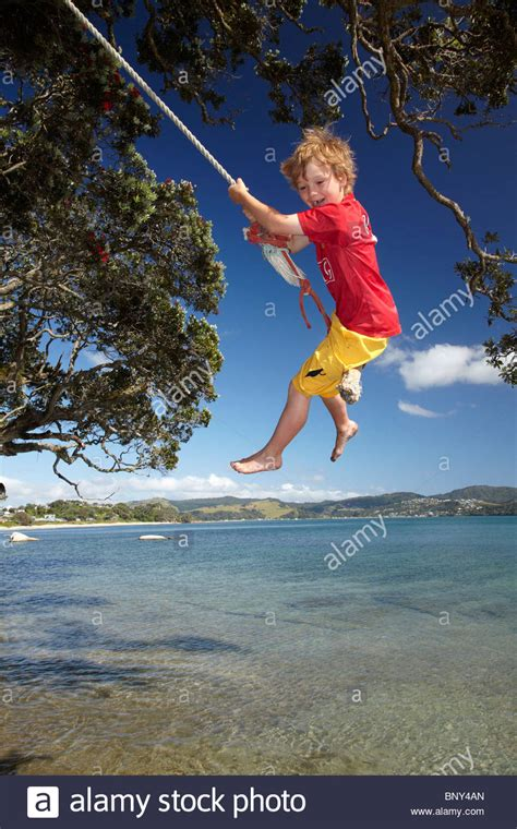 rope swing new zealand young boy on rope swing under pohutukawa tree flaxmill
