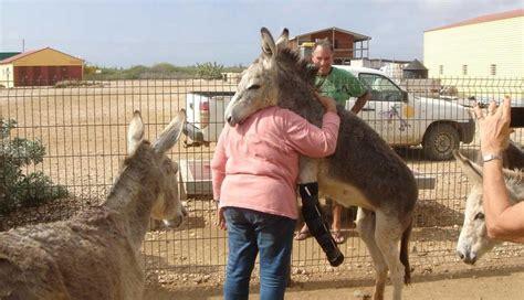 Mujer Es Cogida Por Un Burro | mira c 243 mo este burro salta para abrazar a la mujer que