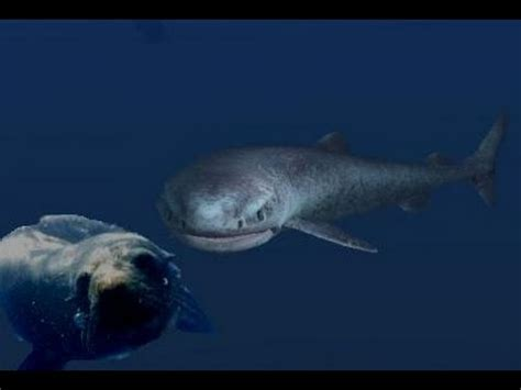 Greenland Sleeper Shark by The Mighty And Mysterious Greenland Shark