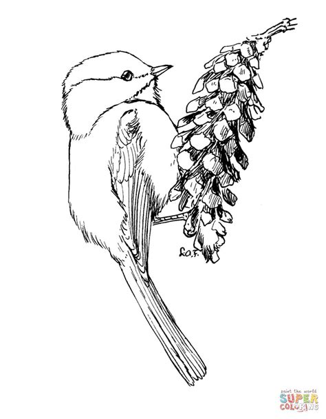 carolina chickadee coloring page free printable coloring