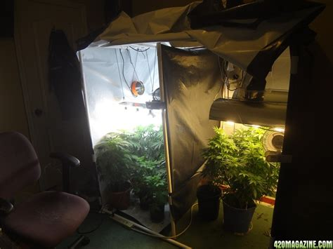 if a flower grew in a room grow bag seed diy grow box ffof with nutes advice welcome page 5