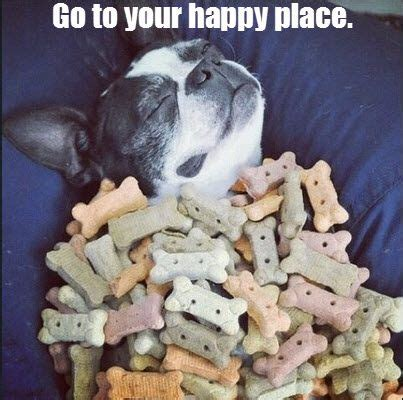 places to buy puppies 9 ways to find your happy place efficient skills