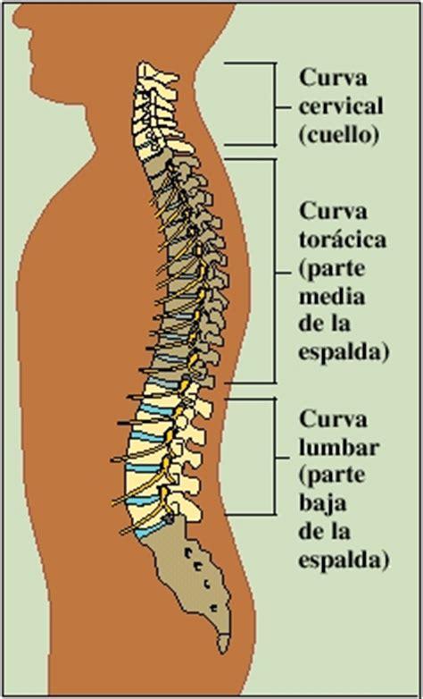 la columna de la 8416771952 krames online c 243 mo funciona la espalda