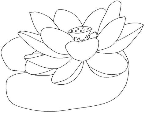printable pictures of lotus flowers lotus flower coloring page az coloring pages