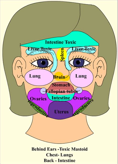 Cystic Pimple Diagram Types Of understand why you have pimples treat the cause instead
