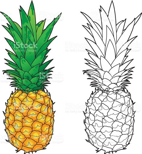 pineapple line color stock vector 483873770 istock