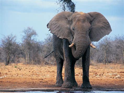 Elephant   NATURE OF THE WORLD