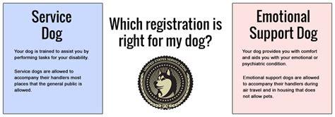 usa service dogs service animal alert