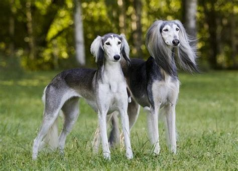 independent breeds top 8 independent breeds that can be left alone