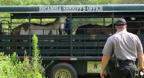 Escambia County Clerk Of Court Records Seven Horses Seized One Charged With Animal Cruelty Northescambia