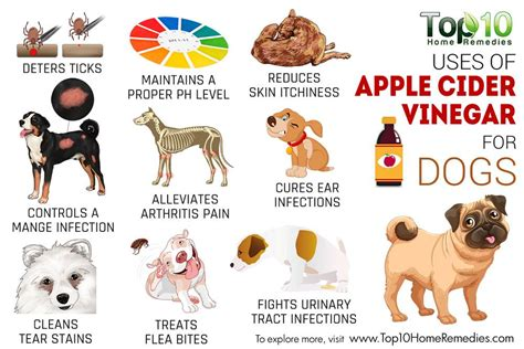 vinegar for dogs top 10 uses of apple cider vinegar for dogs top 10 home remedies