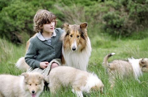 what of is lassie 301 moved permanently